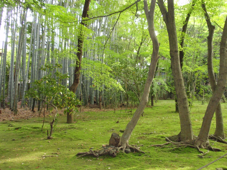 地蔵院(竹の寺)・竹林