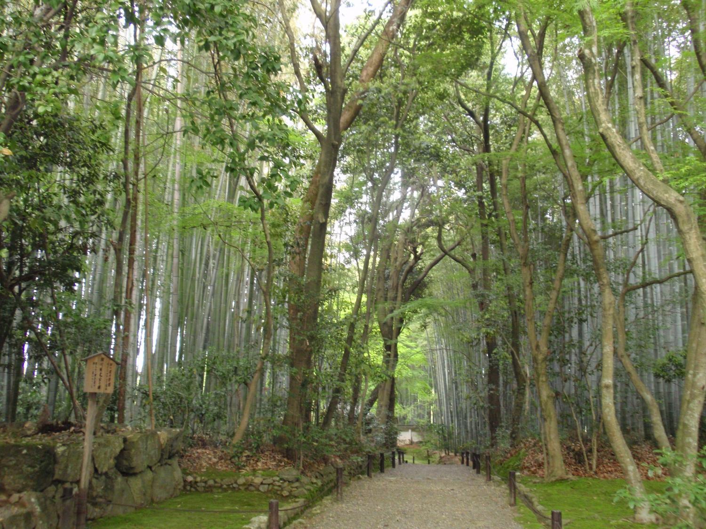 地蔵院(竹の寺)・竹林2