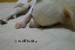 DSC_0076.jpg