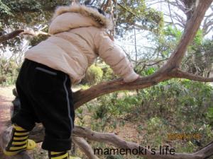 もりで木登り
