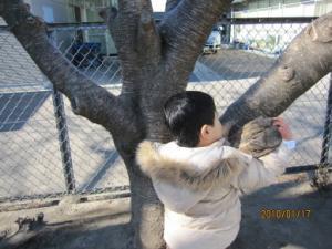 保育園で木登り