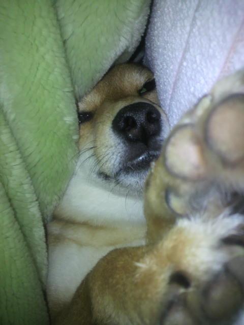 大ちゃんの寝顔2