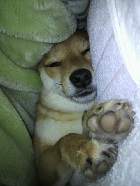 大ちゃんの寝顔
