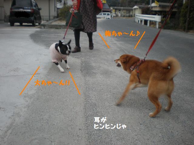 うめちゃん2