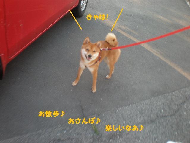 お散歩2jpg