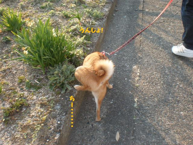 お散歩jpg