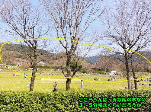DSC06754.jpg