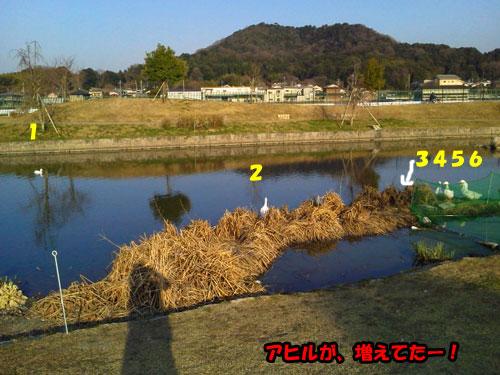 NEC_0687.jpg