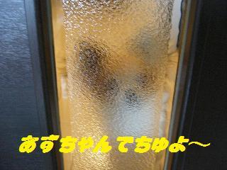 ドア(あず)