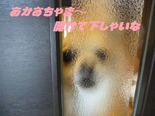 ドア(まな)