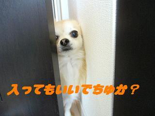 ドア(まな2)