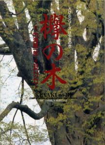 TANIGUCHI-keyaki1.jpg