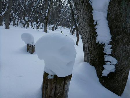 県民の森七滝氷瀑28(2013.1.30)