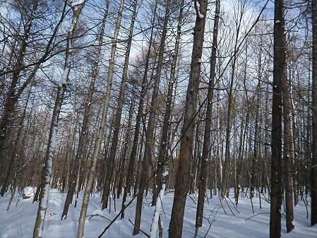県民の森七滝氷瀑32(2013.1.30)
