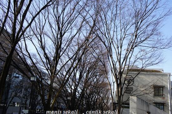 cantik1_20110108213845.jpg