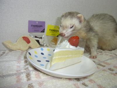 ゴン誕生日2011-2