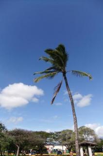 hawai11_convert_20110102230052.jpg