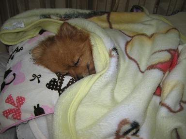 毛布は必需品。