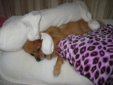 添い寝でポカポカ~