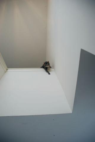 階段の上に・・・