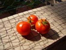 陽だまりネコ『まるまりこ』-今年最後の収穫かも