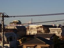 陽だまりネコ『まるまりこ』-01012010FUJI
