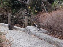 陽だまりネコ『まるまりこ』-赤塚溜池公園の母ちゃんネコ
