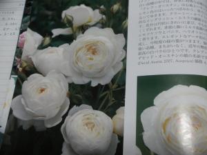 P1280294.jpg