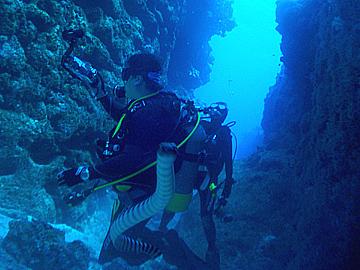 宮古島 中の島チャネル ウミヘビ