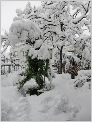 niwa-yuki-2009-12.jpg