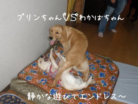 1_20111016210436.jpg