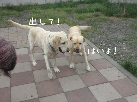 2_20110609191215.jpg