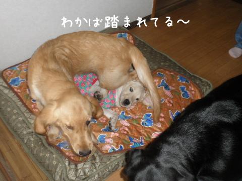2_20111016210436.jpg