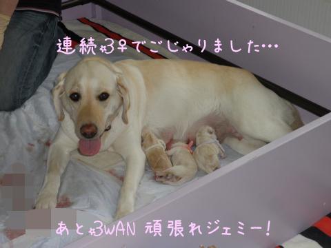 3wan_20110623213649.jpg