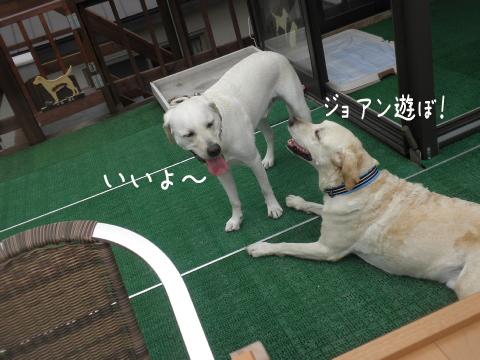 asobo1_20110715233728.jpg