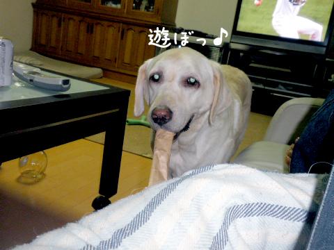 asobo2_20110902224032.jpg
