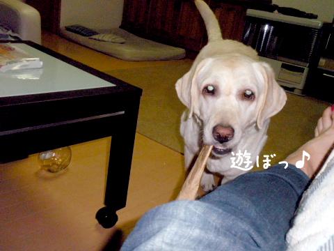 asobo3_20110902224032.jpg