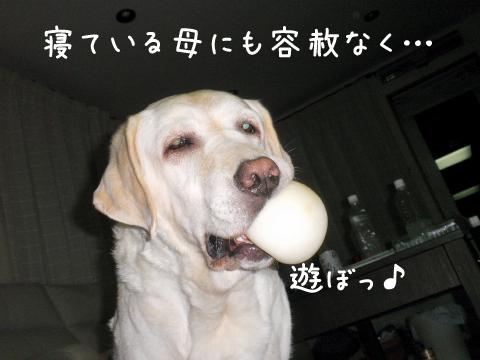 asobo4_20110902224032.jpg
