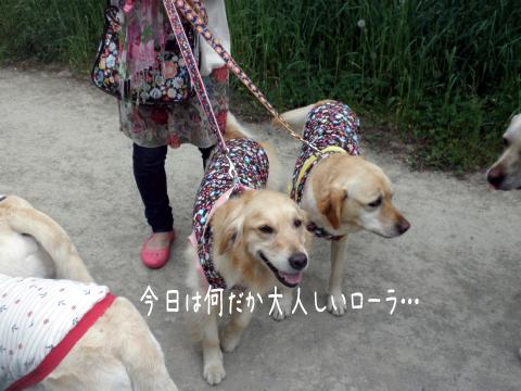babara_20110612190618.jpg