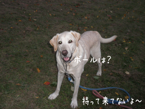 ball_20111016213208.jpg