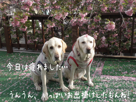 baru1_20110601223758.jpg