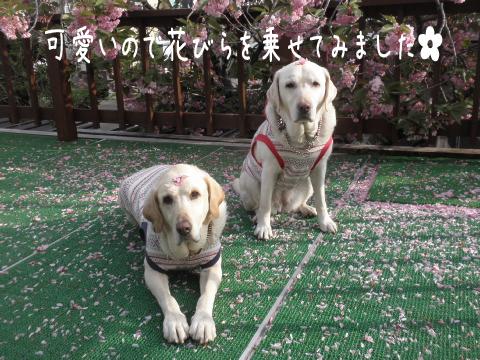 baru2_20110601223757.jpg