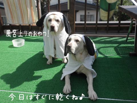 baru2_20110916212521.jpg