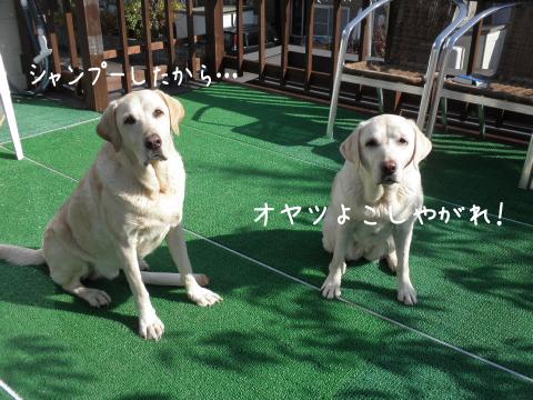baru_20111101215805.jpg