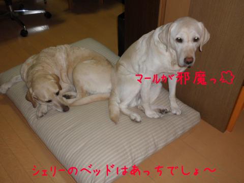 bed1_20110317220958.jpg