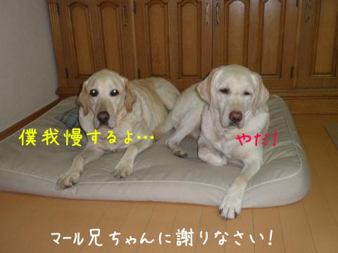 bed1_20110601115704.jpg