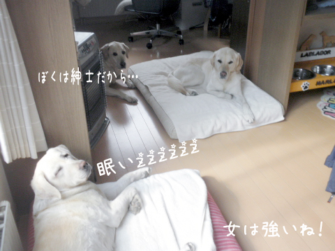 bed1_20111008232551.jpg