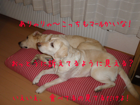bed2_20110317220958.jpg