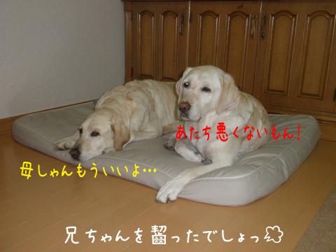 bed2_20110601115703.jpg