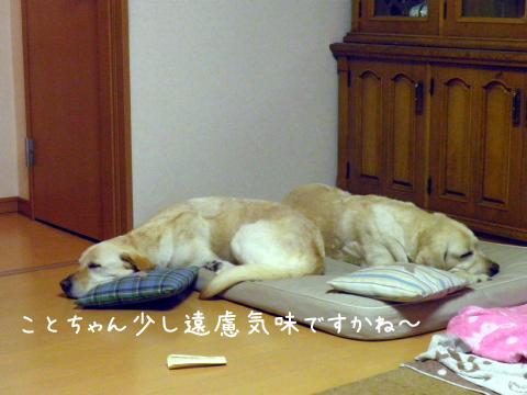 bed2_20111007232825.jpg